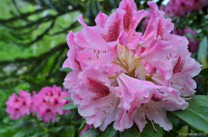 closeup-flower (3)