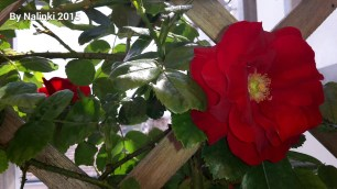 flowersiverflowers (2)