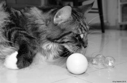 cat-13
