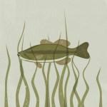 #1- Largemouth Bass