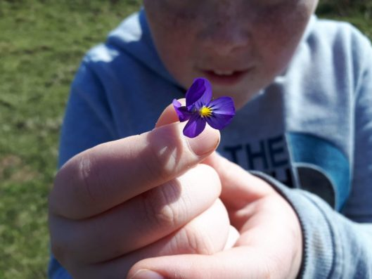 A young boy holding a small purple flower he just found during summer in Anglesey