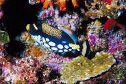 Tubbataha-Reef-in-Sulu