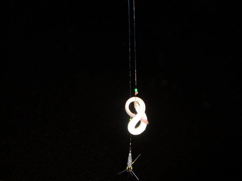 First Eel, Norfolk Groyne, 10.10.2009