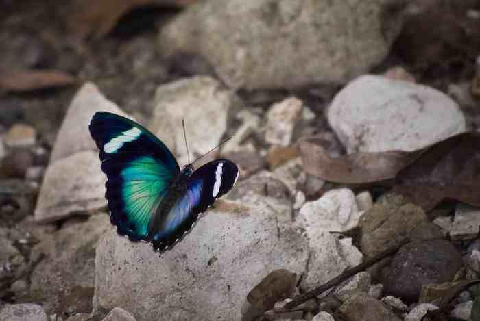 Butterfly © Kostadin Luchansky