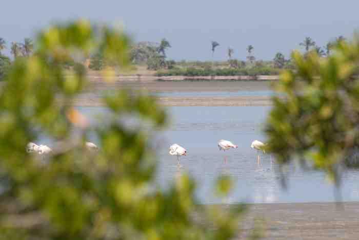 Flamingos © Kostadin Luchansky