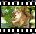 Anxious Frank the Squirrel