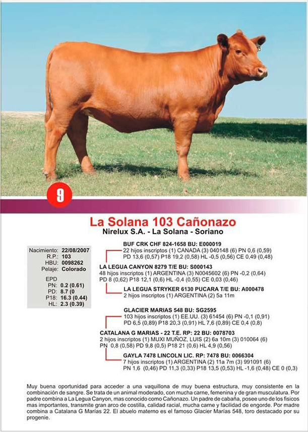 lote9_1