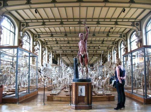 Cuộc diễu hành của những bộ xương ở bảo tàng Pháp - 5