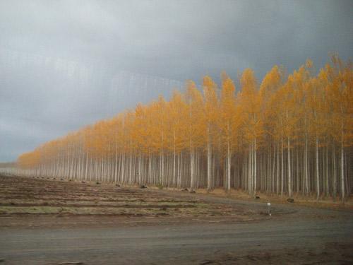 Thăm trại cây thẳng tắp ngả sắc thu - 12