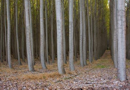 Thăm trại cây thẳng tắp ngả sắc thu - 6