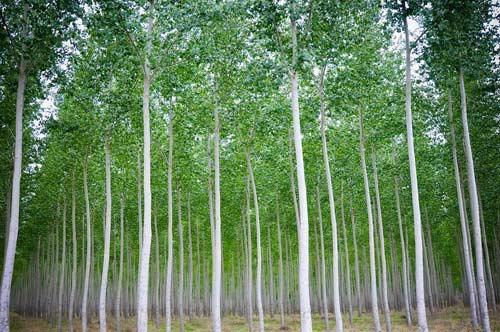 Thăm trại cây thẳng tắp ngả sắc thu - 8