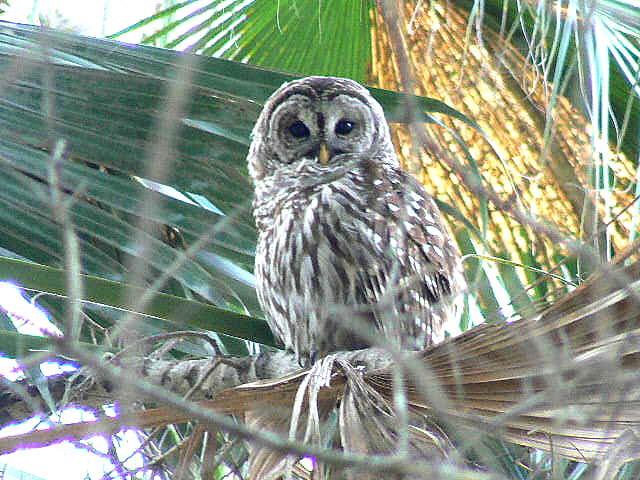 owls-020-1