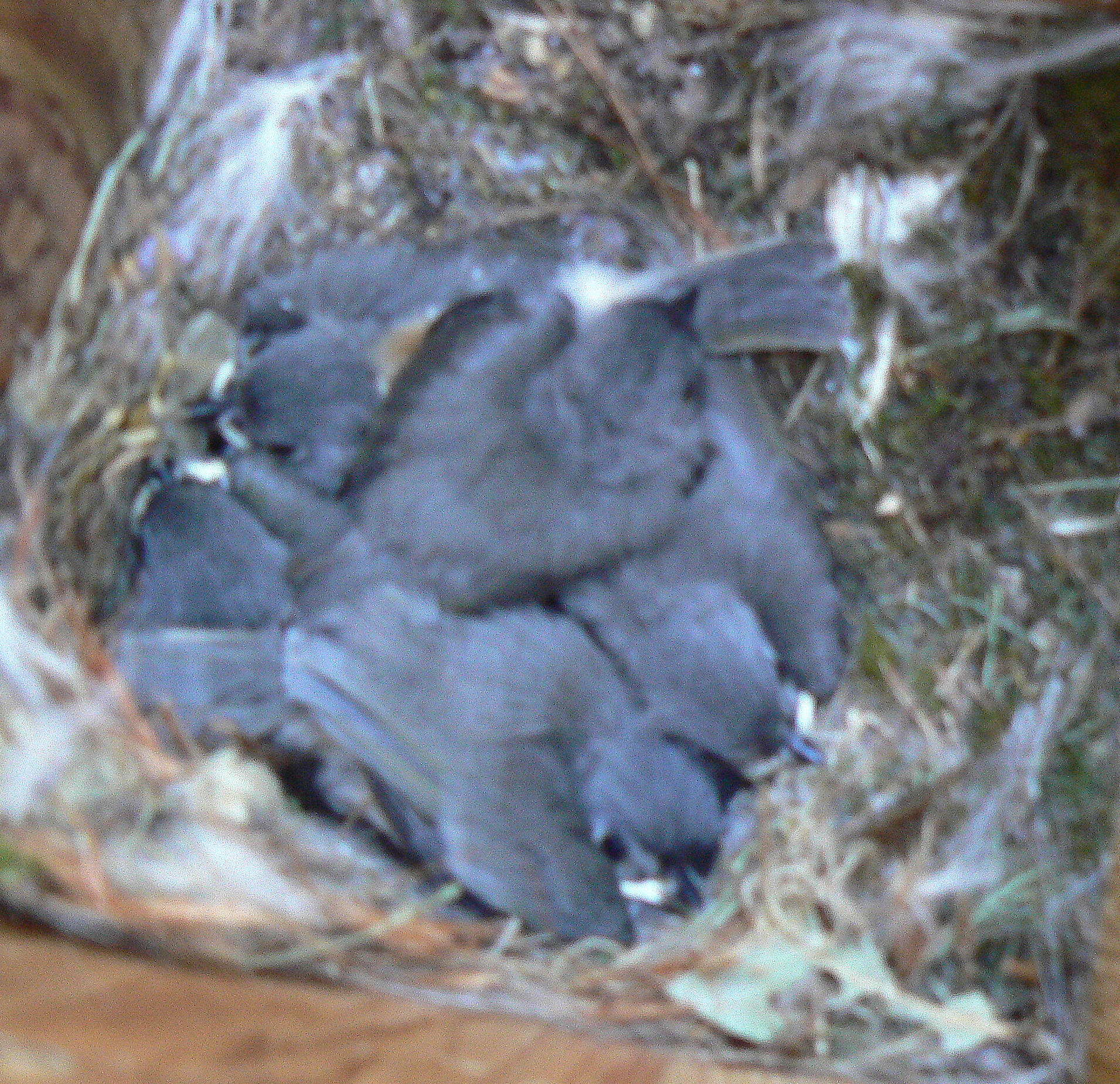 Peek in the bird box with me today. The chicks are growing.