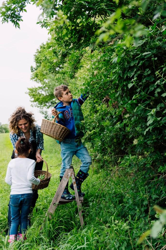 Elderflowers, foraging