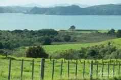 NZ-Dashboard (5)