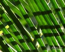 Pattern in palm foliage