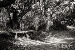 Park bench on Bendalong Headland