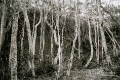 Trees under cliff at Narrawallee Beach Reserve
