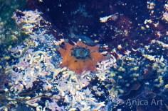 starfish-mollymook-beach