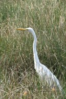 Narooma wildlife (6 of 10)