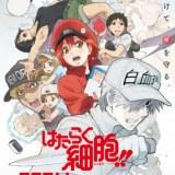アニメ2期『はたらく細胞!!』第2弾PV・放送日程公開!