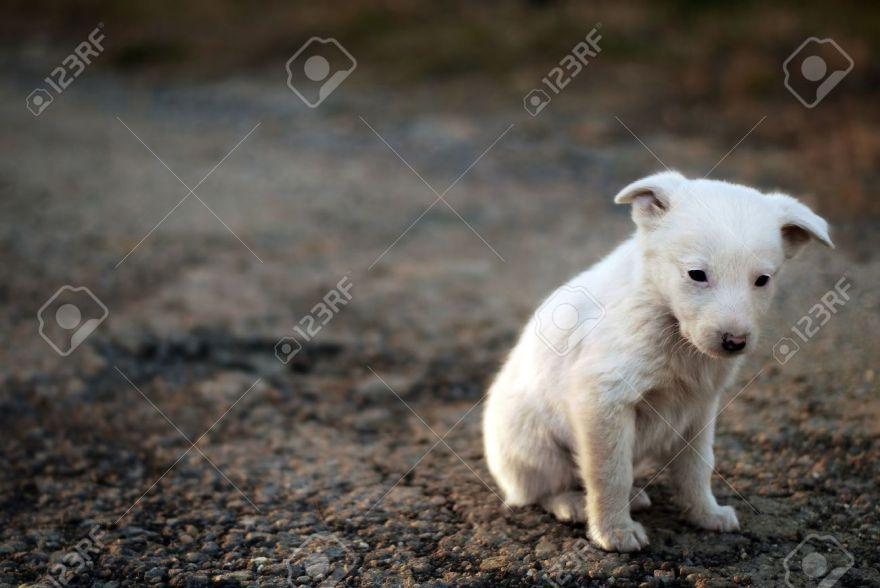 perro-abandonado-triste-familia.jpg