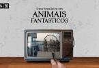 Uma mão usa uma lupa para enxergar melhor as pessoas em uma cena de Animais Fantásticos e Onde Habitam que passa numa televisão. A cena é no início do filme, no barco, e tem vários figurantes. No topo da imagem, há o título do episódio: 26: Uma brasileira em Animais Fantásticos.