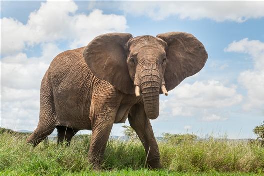 一張含有 室外, 草, 象, 動物 的圖片  自動產生的描述