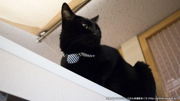 猫カフェ「catwalk」ソラくん