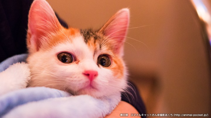 猫カフェ「スマイルキャット」みやけさん2