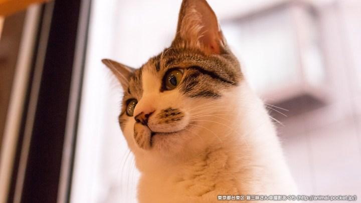 猫カフェ「猫三昧」