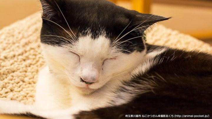 保護猫カフェ「ねこかつ」