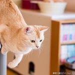 猫カフェ「にゃんころ」