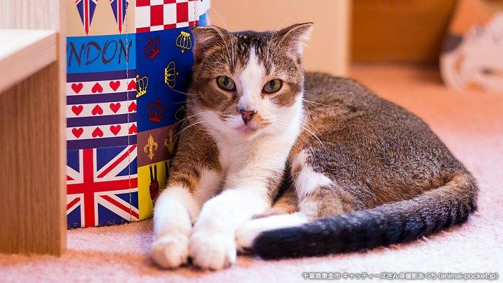 猫カフェ キャッティーズ