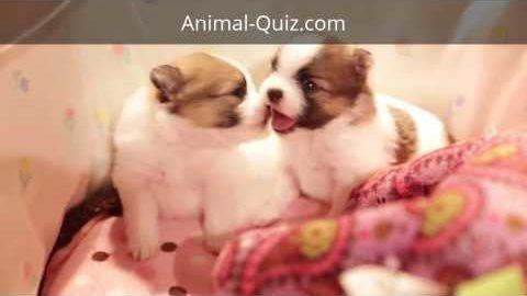 Cutest Baby Animals Ever!!