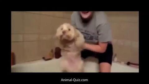 Dogs love Bath Time