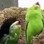 Crazy Groovy Happy Parrots