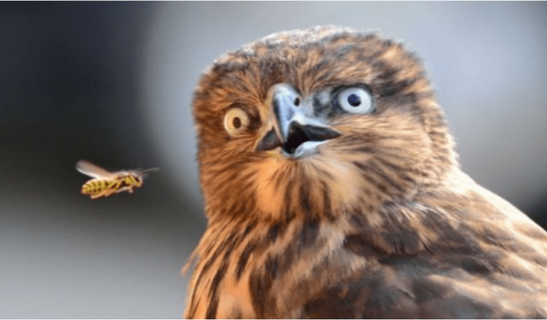 Funny Animal Faces – The 10 funniest and cutest animal faces ever