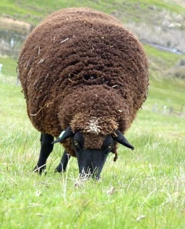 It's just big wool!