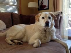 Fletcher, Dog from Prior Lake, MN