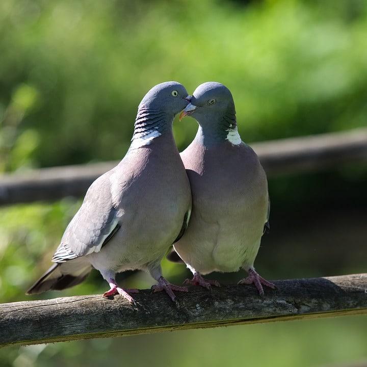 Pigeons 11 Astuces Pour Les Eloigner Le Tout Sans Leur Faire De Mal