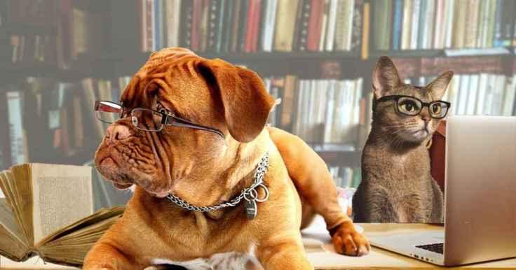 cat-dog-reading