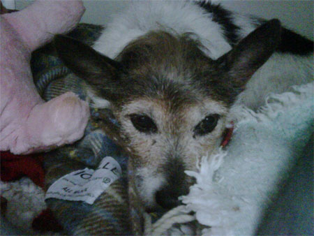 Juba the Jack Russell to England