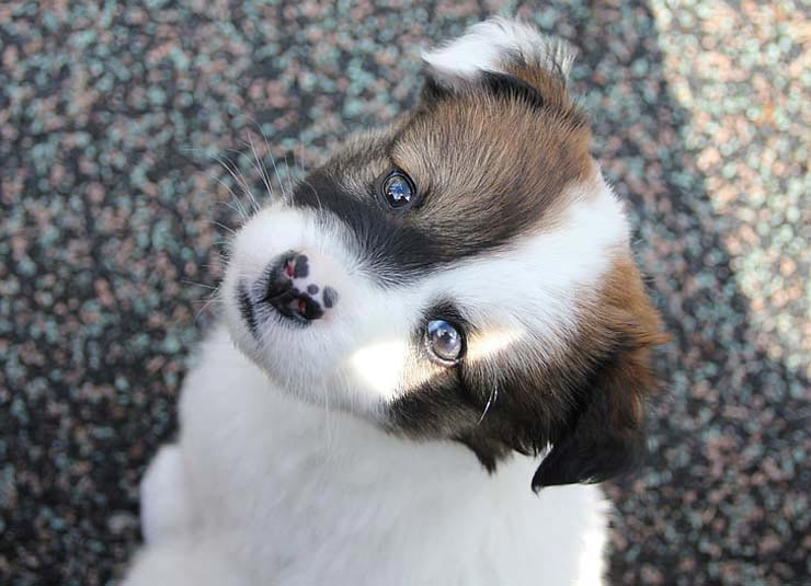 Cute Puppy Breed Cutest Puppy In The World Cute Puppies To Buy