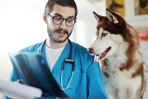 Radiologia-veterinaria