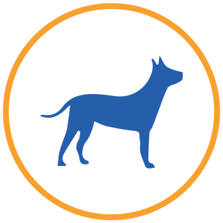 piani salute cane senior