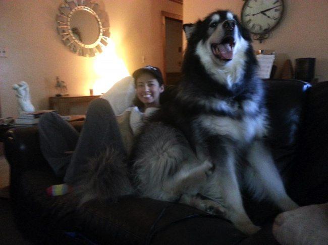 big-dog-10