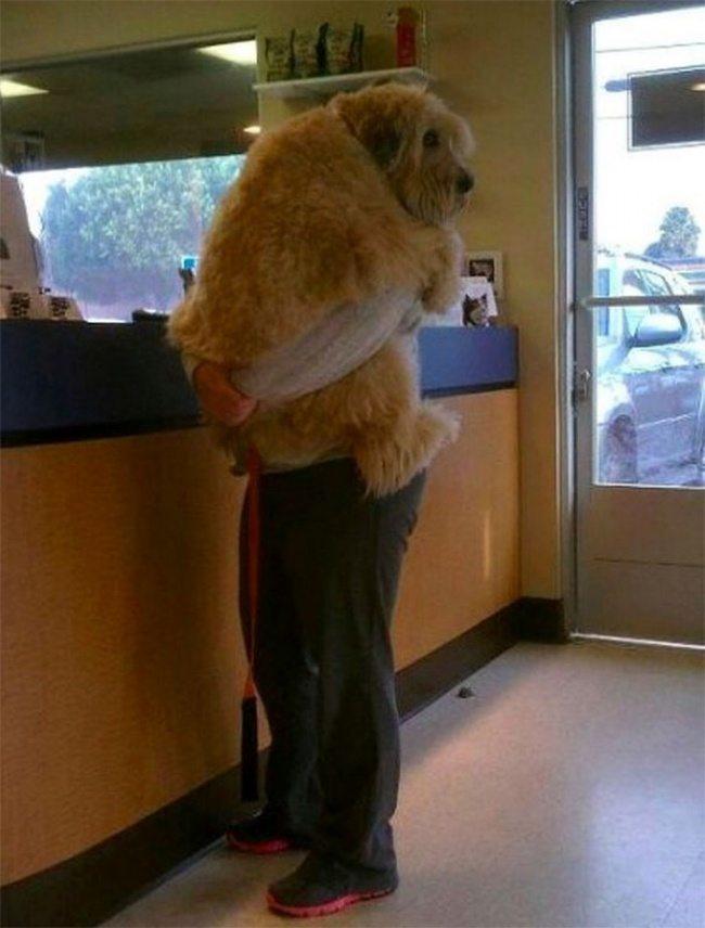 big-dog-14