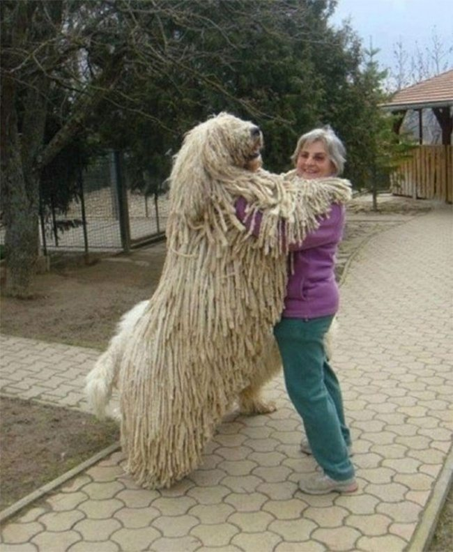 big-dog-16