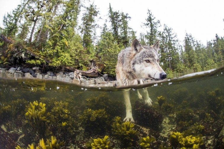 sea-wolf-main